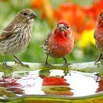 آموزش اسامی پرندگان به انگلیسی birds in English