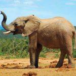 آموزش انگار از دماغ فیل افتاده به انگلیسی hot shit