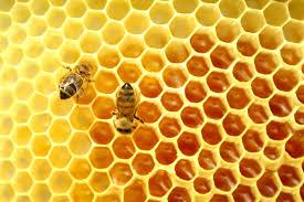 آموزش کندو به زبان انگلیسی hive in english