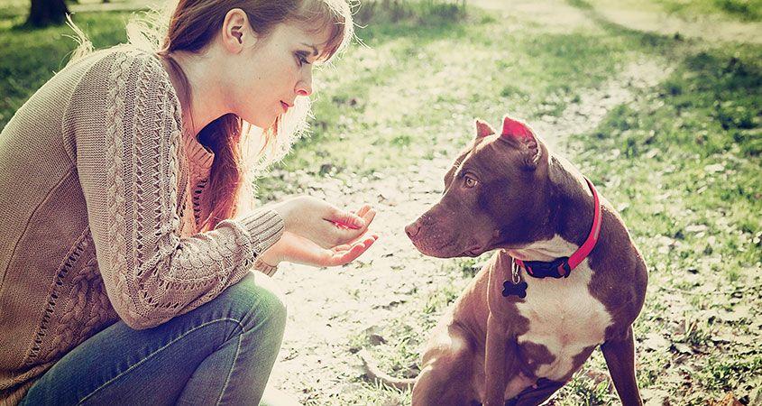 تدریس مکالمه درباره حیوانات خانگی به انگلیسی
